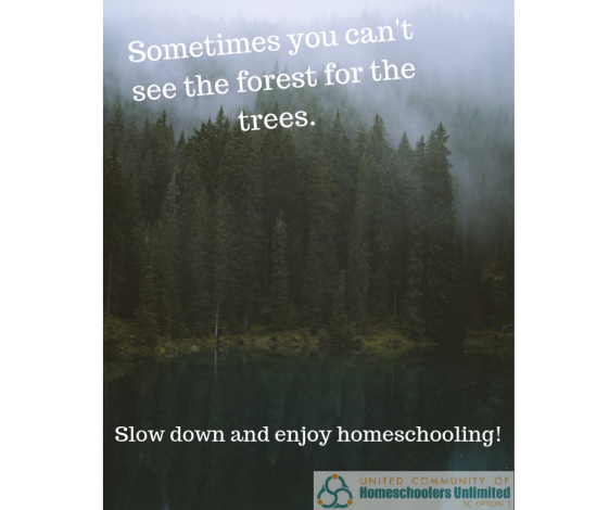 Can't see the forest for the trees-canva